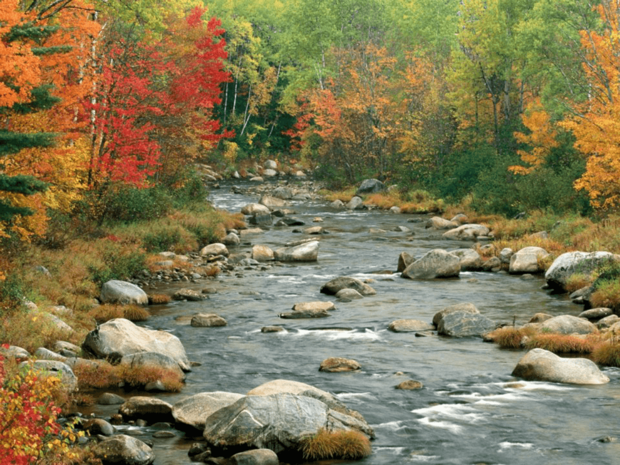 Foliage and River